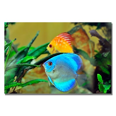 Trademark Fine Art Kurt Shaffer 'Two Tropical Fish II' Canvas Art 18x24 Inches