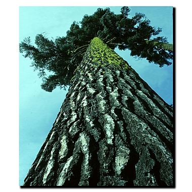 Trademark Fine Art A Tree of Life by Kurt Shaffer-Gallery Wrapped Canvas 14x19 Inches