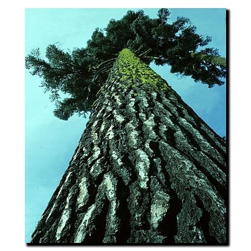 Trademark Fine Art Kurt Shaffer 'A Tree of Life' Matted Art Black Frame 11x14 Inches