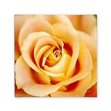 Trademark Fine Art Kathy Yates 'Antique Rose' Canvas Art 18x18 Inches