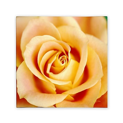 Trademark Fine Art Kathy Yates 'Antique Rose' Canvas Art 14x14 Inches