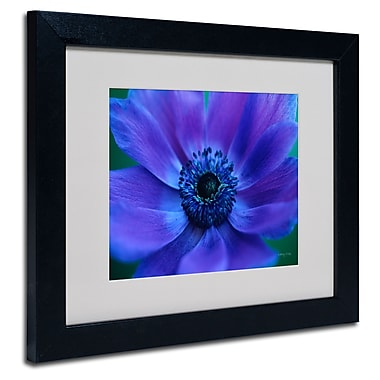 Trademark Fine Art Kathy Yates 'Beautiful Anemone' Matted Art Black Frame 16x20 Inches