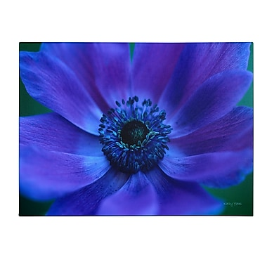 Trademark Fine Art Kathy Yates 'Beautiful Anemone' Canvas Art 14x19 Inches