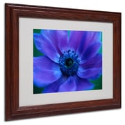 Kathy Yates 'Beautiful Anemone' Matted Framed Art - 16x20 Inches - Wood Frame