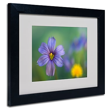 Trademark Fine Art Kathy Yates 'Blue Eyed Grass' Matted Art Black Frame 16x20 Inches