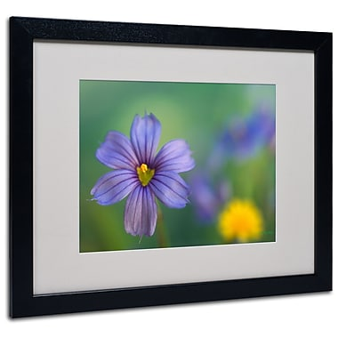 Kathy Yates 'Blue Eyed Grass' Matted Framed Art - 11x14 Inches - Wood Frame