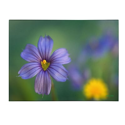 Trademark Fine Art Kathy Yates 'Blue Eyed Grass' Matted Art Black Frame 11x14 Inches