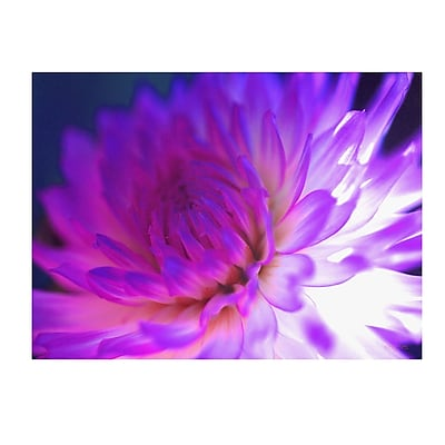 Trademark Fine Art Kathy Yates 'Mod Dahlia' Canvas Art 22x32 Inches