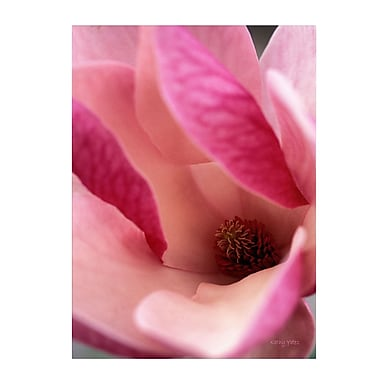 Trademark Fine Art Kathy Yates 'Tulip Magnolia Blossom' Canvas Art 22x32 Inches