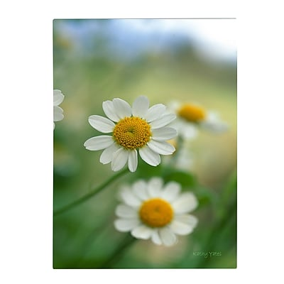 Trademark Fine Art Kathy Yates 'Chamomile' Matted Art Black Frame 11x14 Inches