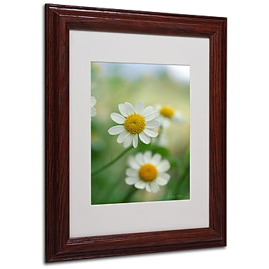 Kathy Yates 'Chamomile' Matted Framed Art - 16x20 Inches - Wood Frame