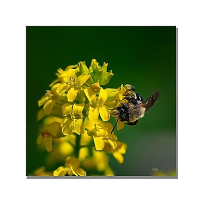 Trademark Fine Art Lois Bryan 'Fanfare for the Common Bumblebee' Canvas Art 18x18 Inches
