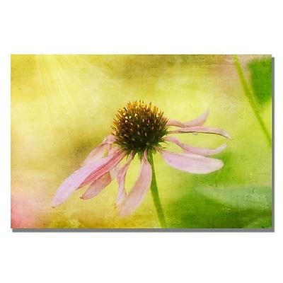 Trademark Fine Art Lois Bryan 'Heart's Desire' Canvas Art 16x24 Inches