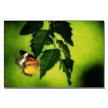 Trademark Fine Art Lois Bryan 'Lacewing Delight' Canvas Art 16x24 Inches