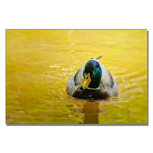 Trademark Fine Art Lois Bryan 'Mallard on Golden Pond' Canvas Art 16x24 Inches
