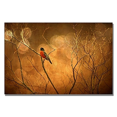 Trademark Fine Art Lois Bryan 'Robin in Shades of Orange' Canvas Art 30x47 Inches