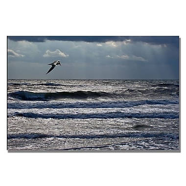 Trademark Fine Art Lois Bryan 'The Tern' Canvas Art 16x24 Inches