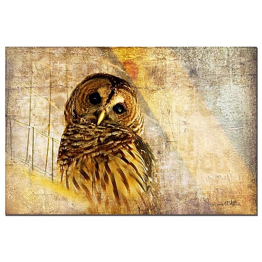 Trademark Fine Art Lois Bryan 'Barred Owl' Canvas Art  Ready to Hang 22x32 Inches
