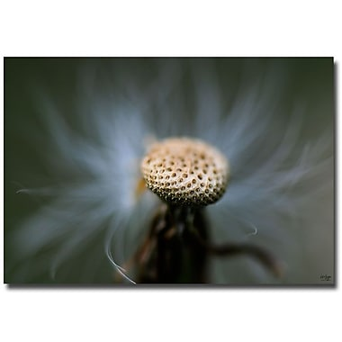 Trademark Fine Art Lois Bryan 'Wispy' Canvas Art 22x32 Inches