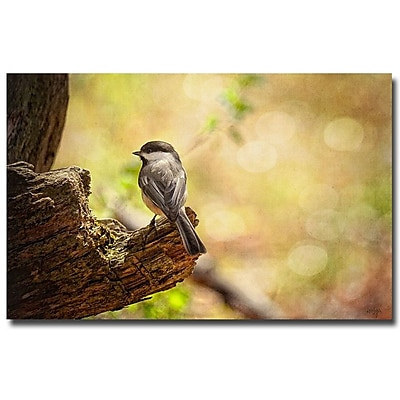 Trademark Fine Art Lois Bryan 'Until Spring' Canvas Art 22x32 Inches