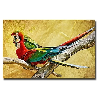 Trademark Fine Art Lois Bryan 'Kissing Macaws' Canvas Art 30x47 Inches