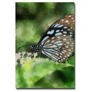 Trademark Fine Art Lois Bryan 'Butterfly in Blue' Canvas Art 16x24 Inches