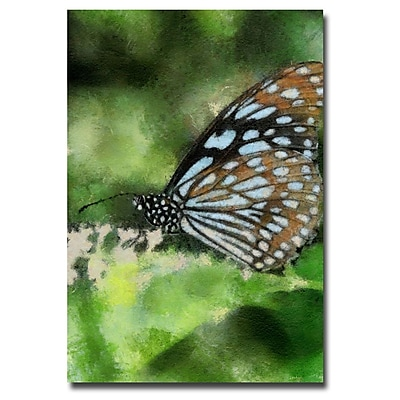 Trademark Fine Art Lois Bryan 'Butterfly in Blue' Canvas Art 30x47 Inches