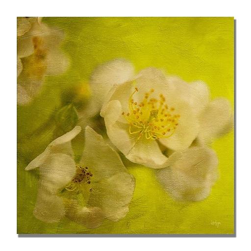 Trademark Fine Art Lois Bryan 'Sunrise II' Canvas Art 18x18 Inches