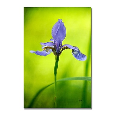 Trademark Fine Art Lois Bryan 'Iris' Canvas Art 22x32 Inches