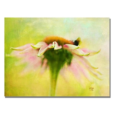 Trademark Fine Art Lois Bryan 'Daisy' Canvas Art 18x24 Inches