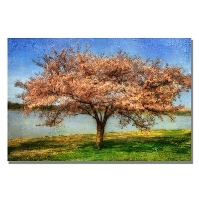 Trademark Fine Art Lois Bryan 'Cherry Tree' Canvas Art 16x24 Inches
