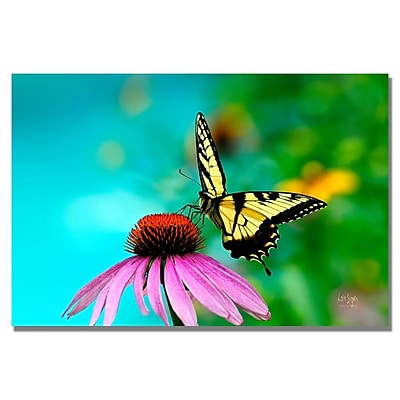Trademark Fine Art Lois Bryan 'Butterfly on the Edge' Canvas Art 35x47 Inches