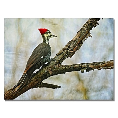 Trademark Fine Art Lois Bryan 'Woodpecker II' Canvas Art 18x24 Inches