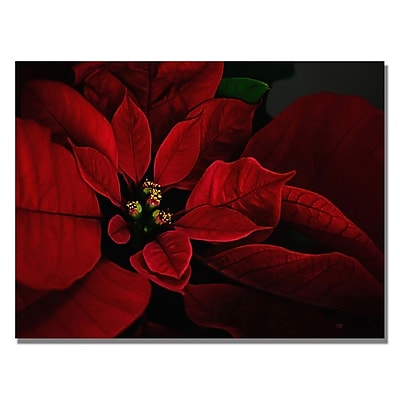 Trademark Fine Art Lois Bryan 'Poinsettia' Canvas Art 30x47 Inches