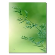 Trademark Fine Art Lois Bryan 'Keep Green' Canvas Art 22x32 Inches