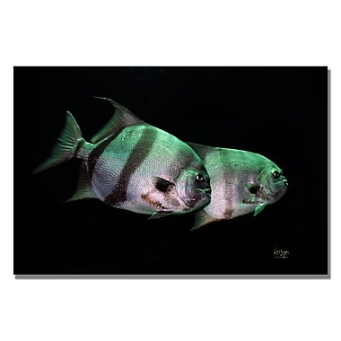 Trademark Fine Art Lois Bryan 'Fish in the Dark' Canvas Art 16x24 Inches