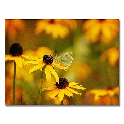 Trademark Fine Art Lois Bryan 'Butterfly on a Flower' Canvas Art 30x47 Inches
