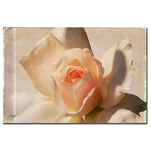 Trademark Fine Art Lois Bryan 'Textured White Rose' Canvas Art 16x24 Inches