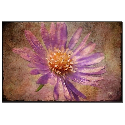 Trademark Fine Art Lois Bryan 'Textured Aster' Canvas Art 14x19 Inches