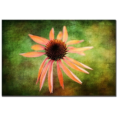 Trademark Fine Art Lois Bryan 'Textured Golden Coneflower' Canvas Art 16x24 Inches