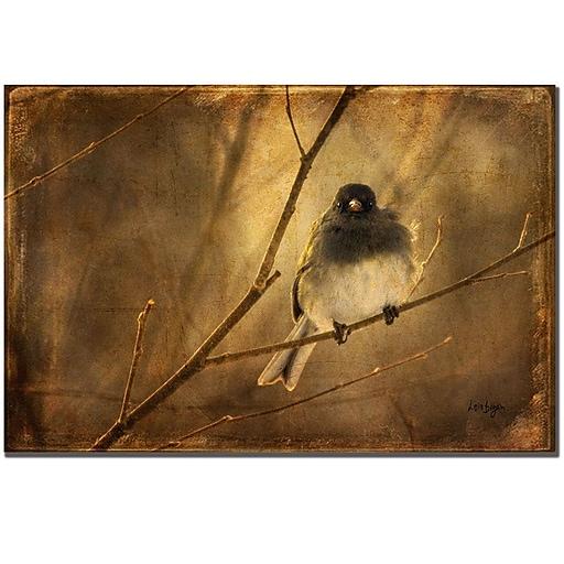Trademark Fine Art Lois Bryan 'Backlit Birdie Being Buffeted' Canvas Art 22x32 Inches