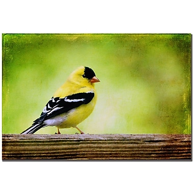 Trademark Fine Art Lois Bryan 'American Golden Finch in Spring' Canvas Art 16x24 Inches