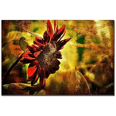 Trademark Fine Art Lois Bryan 'Sunflower' Canvas Art 22x32 Inches