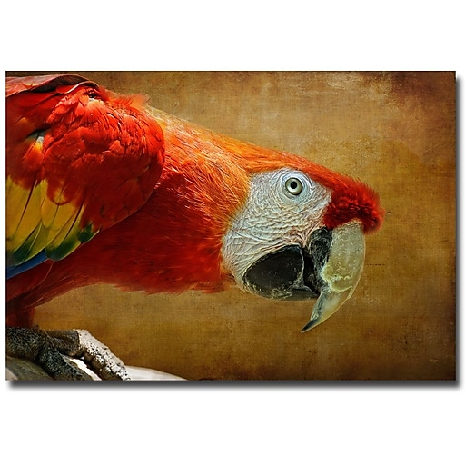 Trademark Fine Art Lois Bryan 'Colorful Bird' Canvas Art 16x24 Inches
