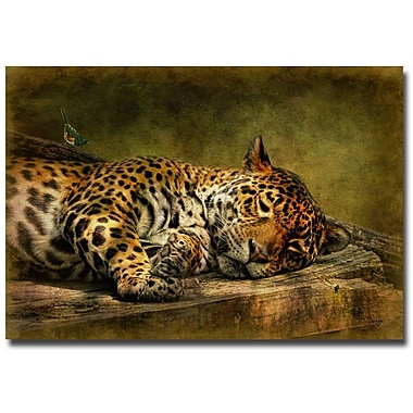 Trademark Fine Art Lois Bryan 'Wake Up Sleepyhead' Canvas Art 30x47 Inches