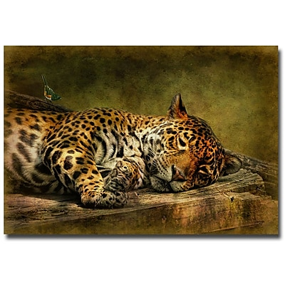 Trademark Fine Art Lois Bryan 'Wake Up, Sleepyhead' Canvas Art 16x24 Inches