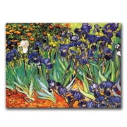 Trademark Fine Art Vincent van Gogh 'Irises at Saint-Remy' Canvas Art