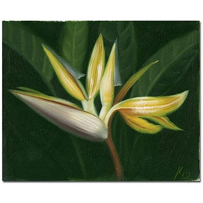Trademark Fine Art Lilies' Canvas Art Ready to Hang 14x19 Inches