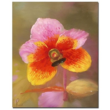 Trademark Fine Art Orange-Pink Orchid' Canvas Art Ready to Hang 35x47 Inches