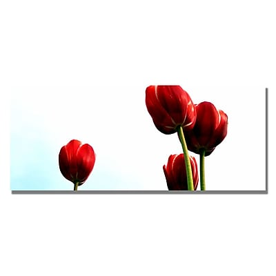 Trademark Fine Art Michelle Calkins 'Four Red Tulips' Canvas Art 12x32 Inches